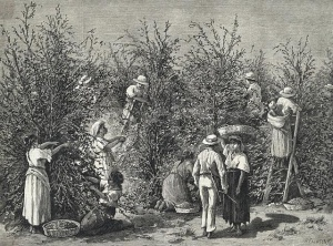 historie sběru